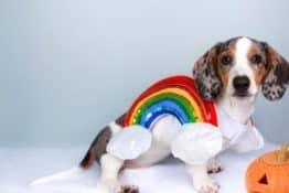 Top 10 Sausage Dog Halloween Costumes!