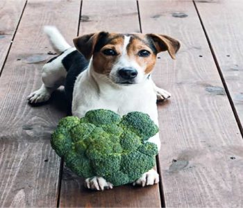 Can Dogs Eat Broccoli? Our Vet Weighs In