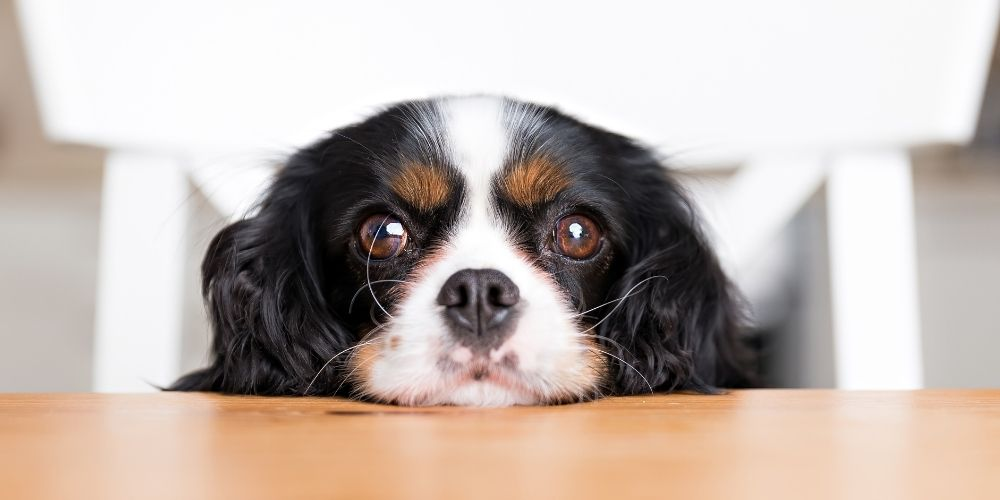 Hot Spots on Dogs: Causes, Treatment & Prevention [Vet Expert Guide]