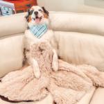 Giant Fuzzy Blanket