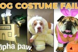 Video: 10 Biggest Dog Halloween Costume Fails
